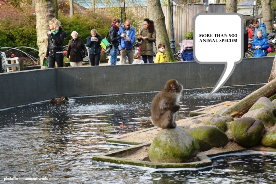 Artis_Royal_zoo_Amsterdam