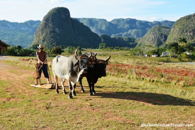 Pictures_from_Vinales_valley_Cuba